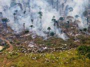 PRAŠUME NESTAJU NEVJEROJATNOM BRZINOM Svakih šest sekundi uništi se prašuma veličine nogometnog igrališta