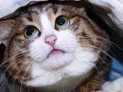 Rexi je posebna maca: Jede kao čovjek i postao je mačji 'celebrity'