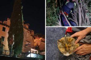 Vatrogasci u Rovinju imali pune ruke posla: S visokog čempresa spuštali mačku, ali i vlasnicu