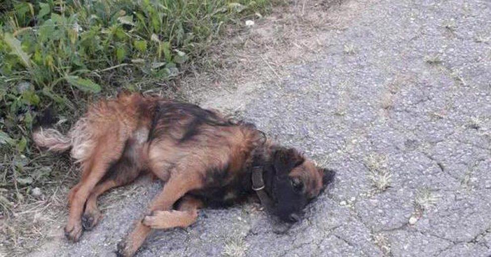 Načelnik Općine Sveti Ivan Žabno i komunalni redar nisu krivi što nisu zbrinuli psa